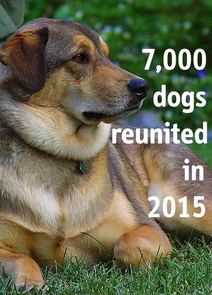 DogLost reunited 7000 dogs in 2015